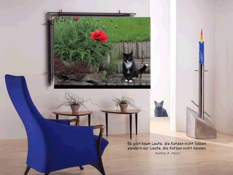 Katzen erreichen mühelos, was Menschen versagt bleibt: Durchs Leben zu gehen ohne Lärm zu machen. Hemingway