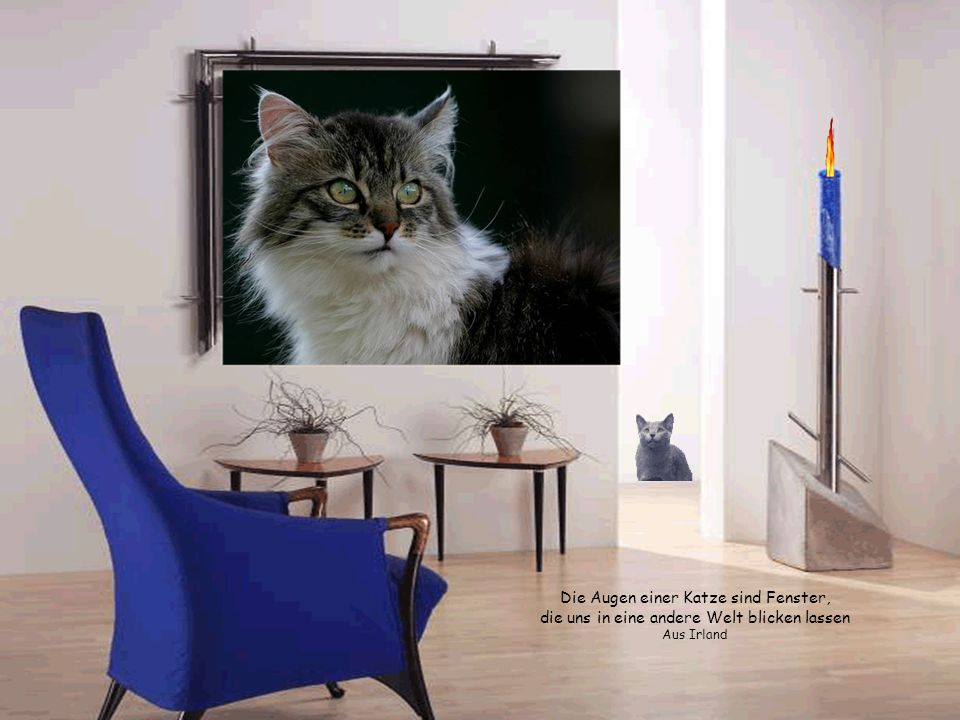 Audrey A. Hayes Es gibt kaum Leute, die Katzen nicht lieben, sondern nur Leute, die Katzen nicht kennen. Audrey A. Hayes