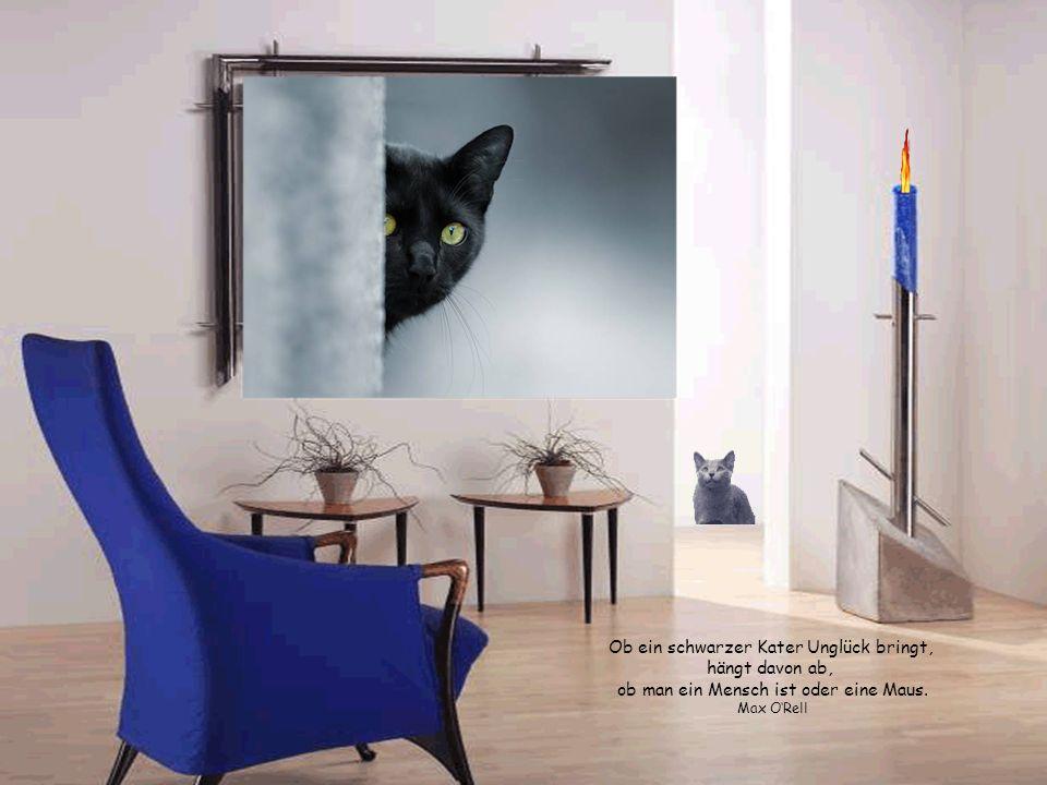 Katzen sitzen immer an der falschen Seite einer Tür. Lässt man sie raus, wollen sie rein – lässt man sie rein, wollen sie raus. Unbekannt