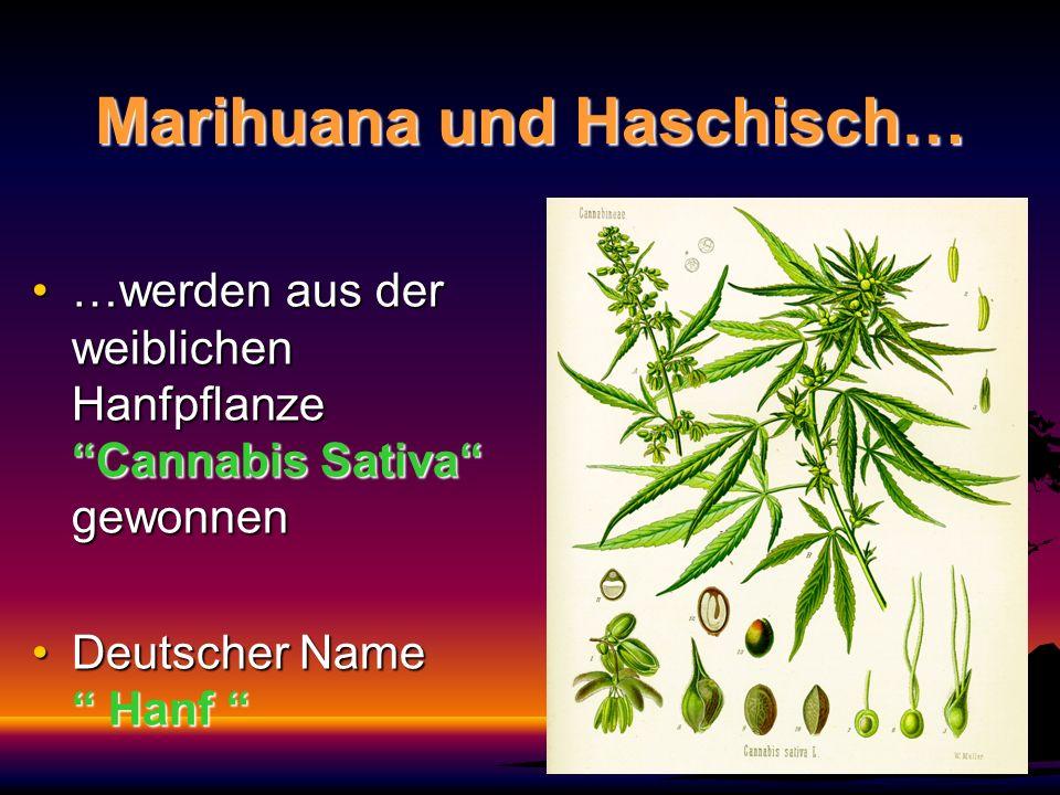 Marihuana und Haschisch… …werden aus der weiblichen Hanfpflanze Cannabis Sativa gewonnen…werden aus der weiblichen Hanfpflanze Cannabis Sativa gewonne