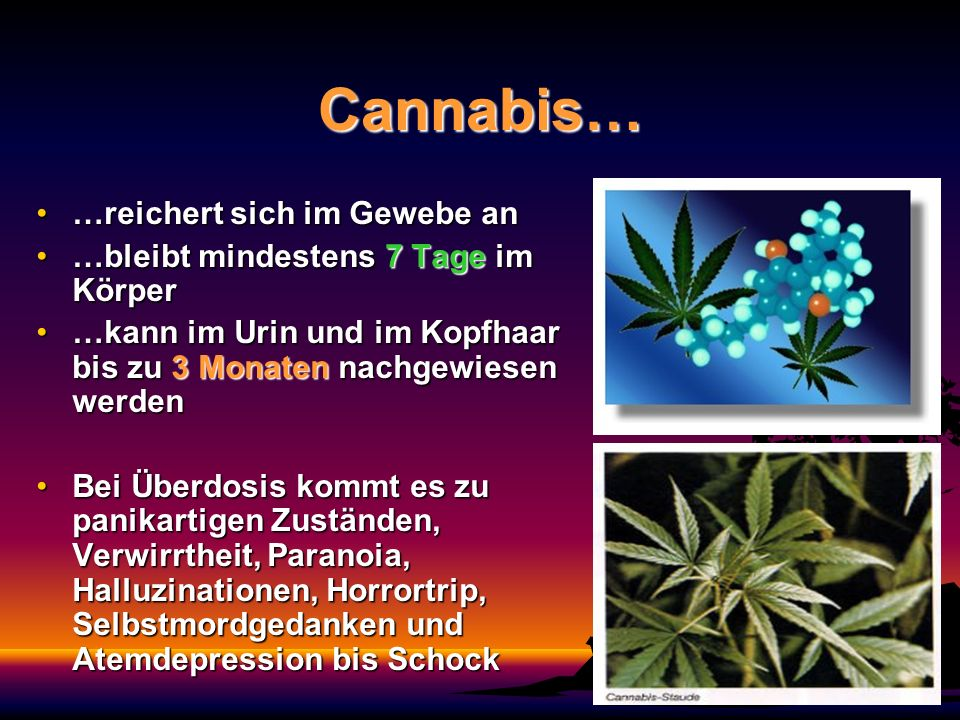 Cannabis… …reichert sich im Gewebe an…reichert sich im Gewebe an …bleibt mindestens 7 Tage im Körper…bleibt mindestens 7 Tage im Körper …kann im Urin
