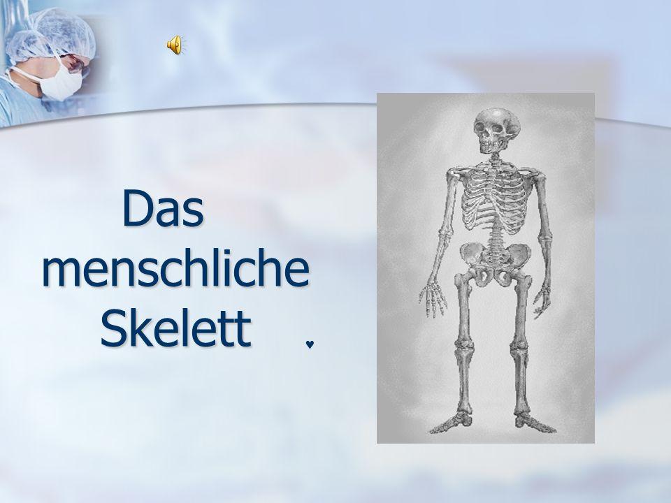 Gelenke und Bänder Gelenke stellen die beweglichen Verbindungen zwischen den einzelnen Knochen her.
