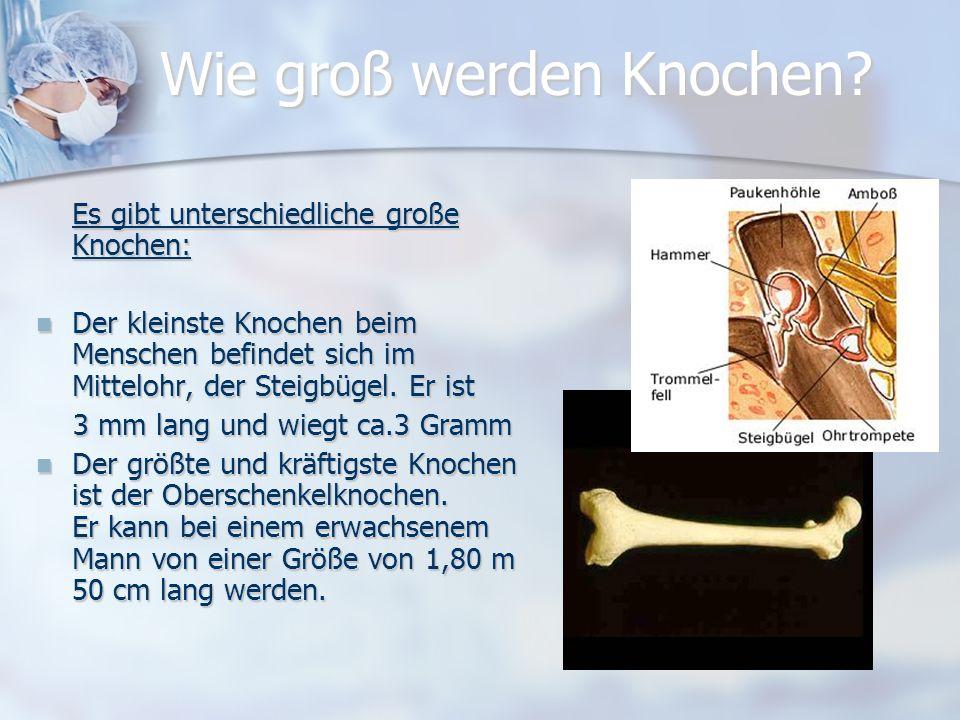 Welche Knochenformen gibt es ? Es gibt 4 Formen: Lange Knochen (Röhrenknochen) findet man in den Armen, Händen, Beinen und Füßen. Lange Knochen (Röhre