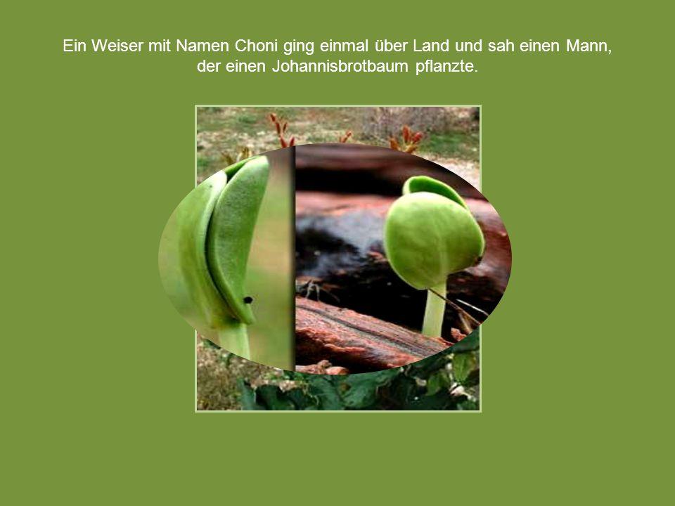 Ein Weiser mit Namen Choni ging einmal über Land und sah einen Mann, der einen Johannisbrotbaum pflanzte.
