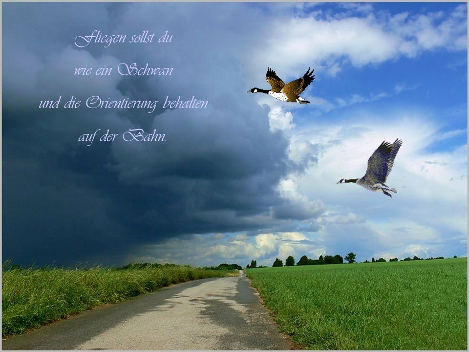 Fliegen sollst du wie ein Schwan und die Orientierung behalten auf der Bahn.