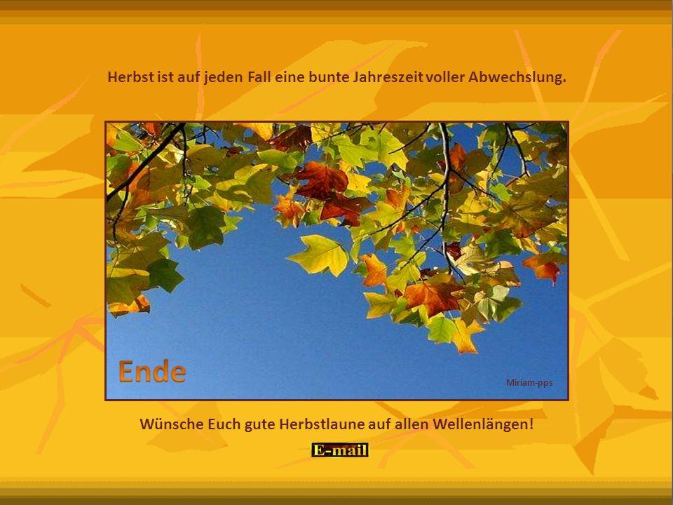 Ja, auch der Herbst hat seine Vorzüge! Traumhafte Farbenspiele – überall. Zeit der Ernte und die der bunten Blätter.