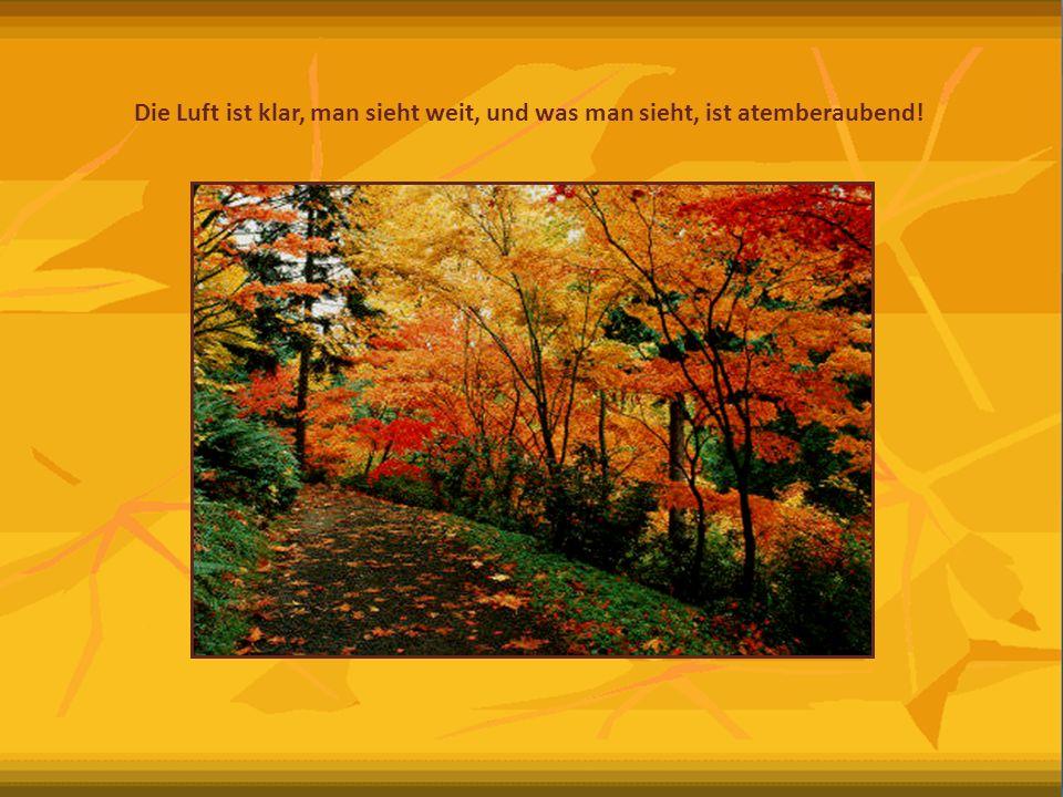 Die Sonne meint es gut mit uns – eine wundervolle Jahreszeit um die Natur von ihrer goldene Seite zu genießen.
