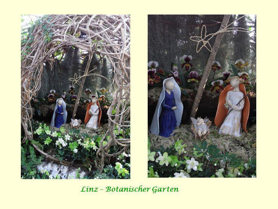 Linz – Botanischer Garten