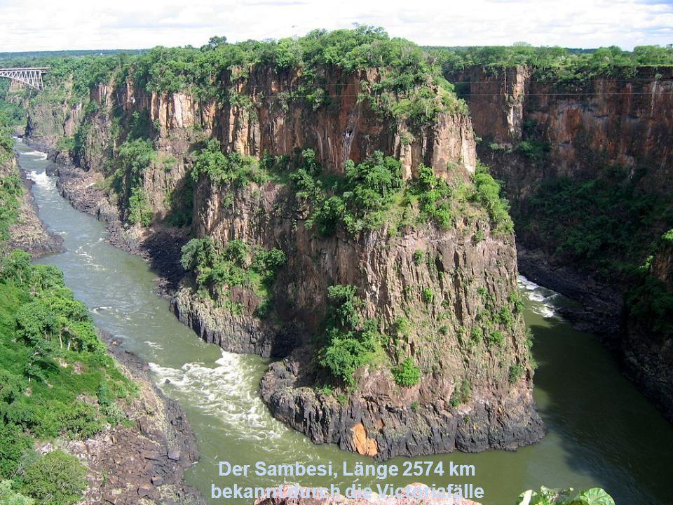 Der Kongo, Länge 4374 km zweitlängster Strom Afrikas, fließt vor allem durch das Kongobecken