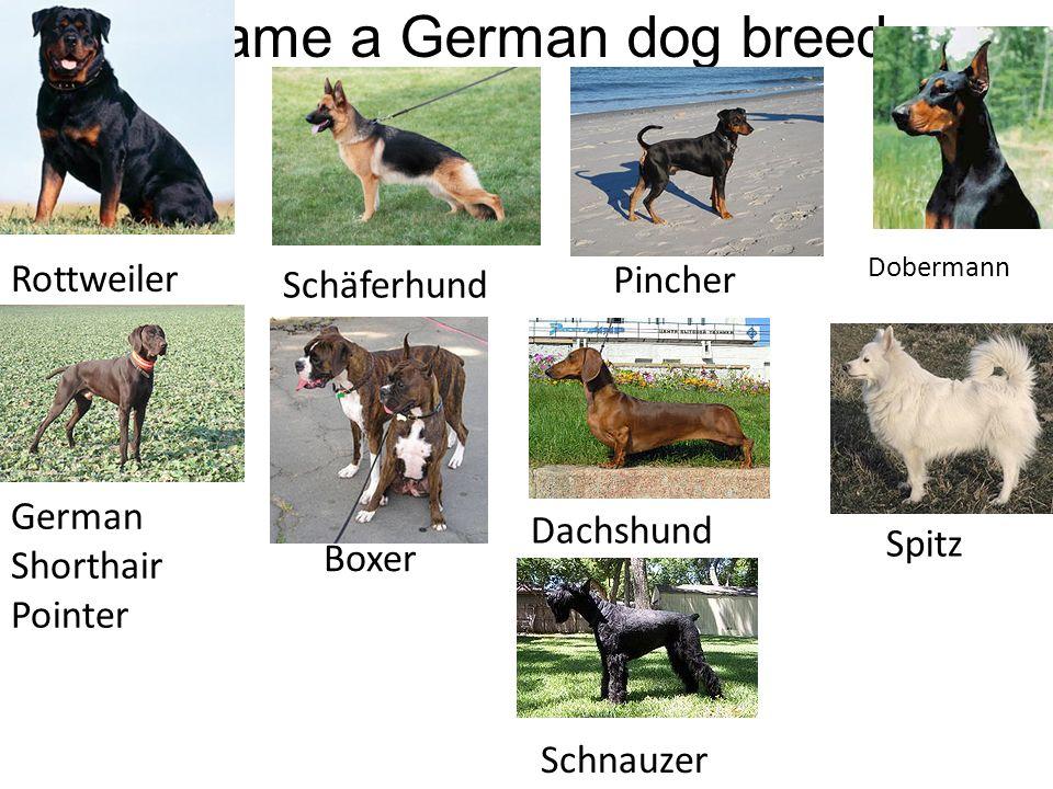 Rottweiler Schäferhund Dobermann German Shorthair Pointer Boxer Dachshund Pincher Spitz Schnauzer