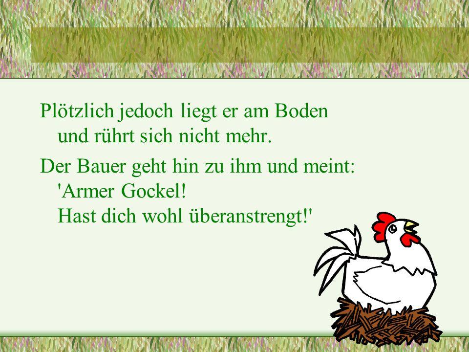 ... doch dann geht es los: Zuerst bumst er alle Hühner, danach die Ziegen, die Schafe, nochmals die Hühner, läuft rüber zum Nachbarhof, dort dasselbe