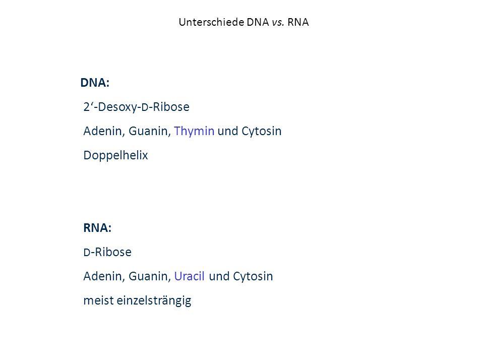 Unterschiede DNA vs. RNA DNA: 2-Desoxy- D -Ribose Adenin, Guanin, Thymin und Cytosin Doppelhelix RNA: D -Ribose Adenin, Guanin, Uracil und Cytosin mei