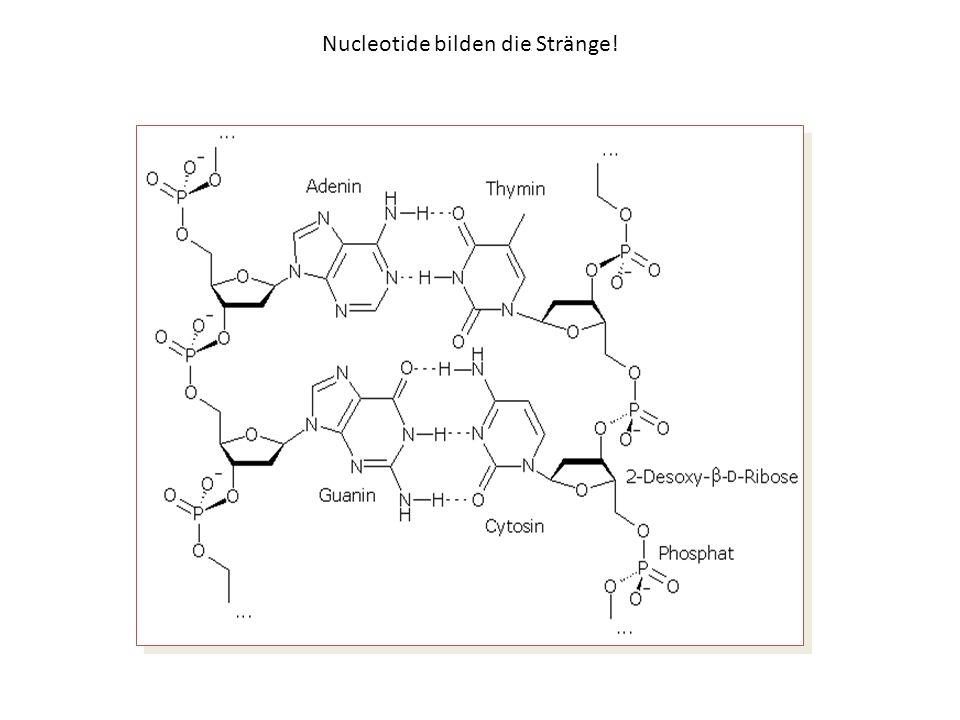 Nucleotide und Nucleoside
