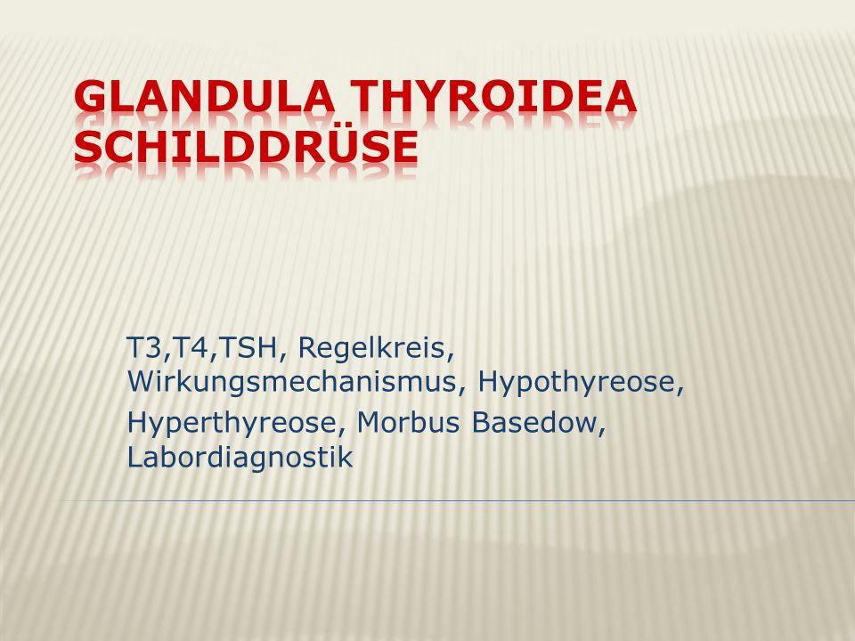 T3,T4,TSH, Regelkreis, Wirkungsmechanismus, Hypothyreose, Hyperthyreose, Morbus Basedow, Labordiagnostik