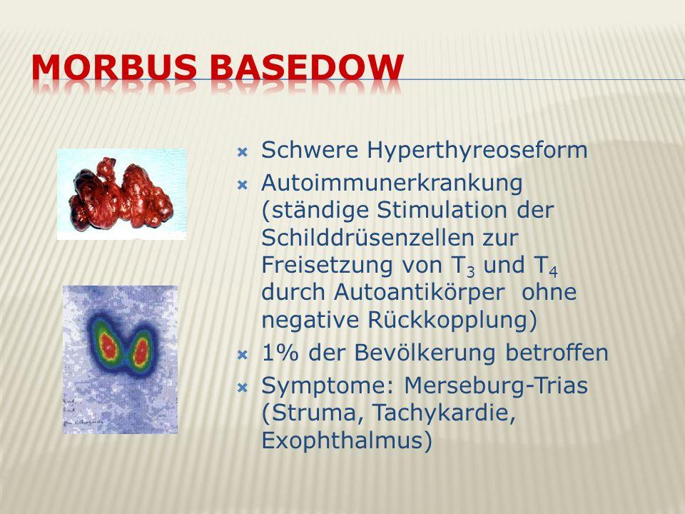 Schwere Hyperthyreoseform Autoimmunerkrankung (ständige Stimulation der Schilddrüsenzellen zur Freisetzung von T 3 und T 4 durch Autoantikörper ohne n