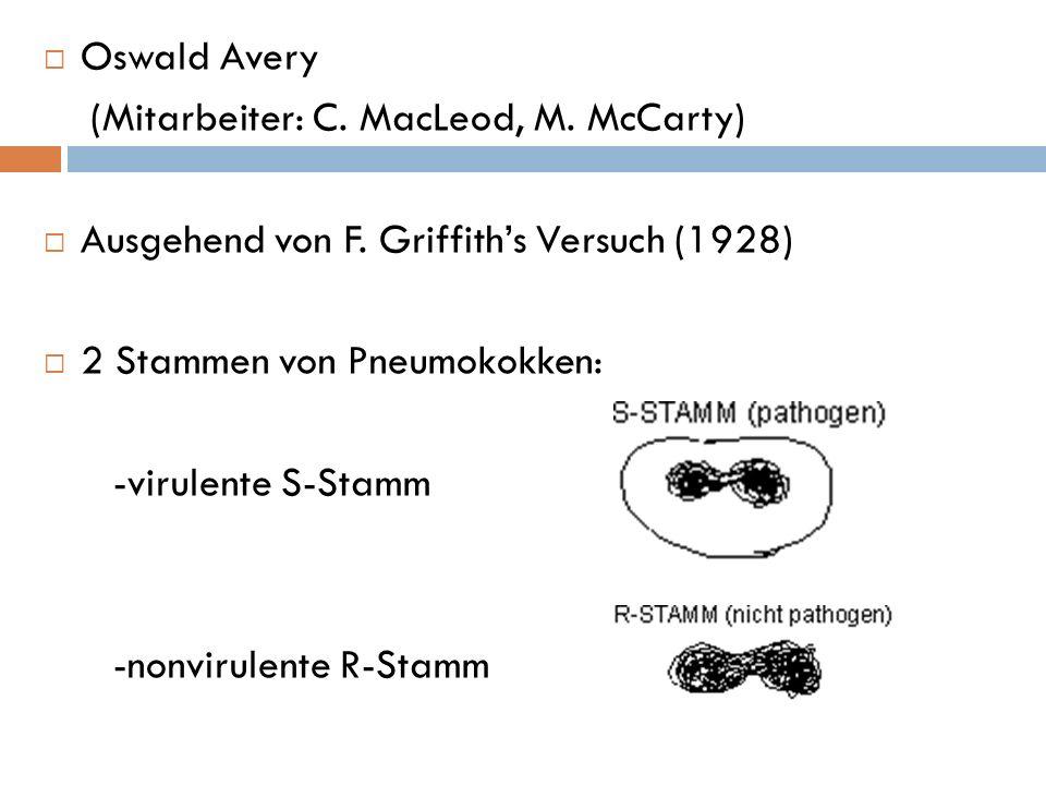 Oswald Avery (Mitarbeiter: C. MacLeod, M. McCarty) Ausgehend von F. Griffiths Versuch (1928) 2 Stammen von Pneumokokken: -virulente S-Stamm -nonvirule
