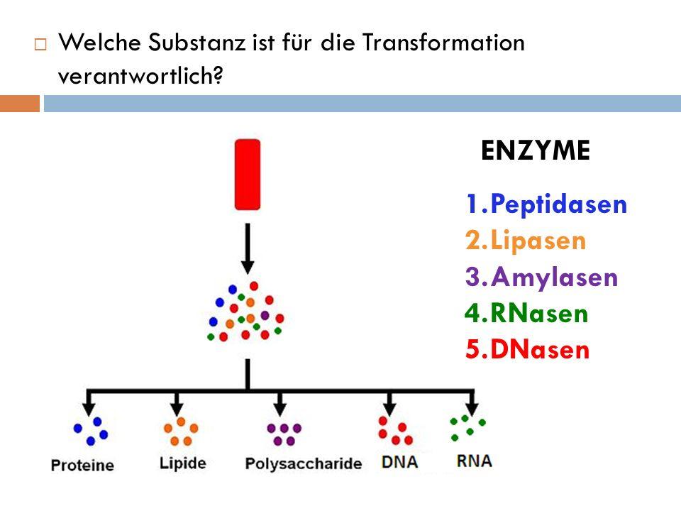 Welche Substanz ist für die Transformation verantwortlich? ENZYME 1.Peptidasen 2.Lipasen 3.Amylasen 4.RNasen 5.DNasen