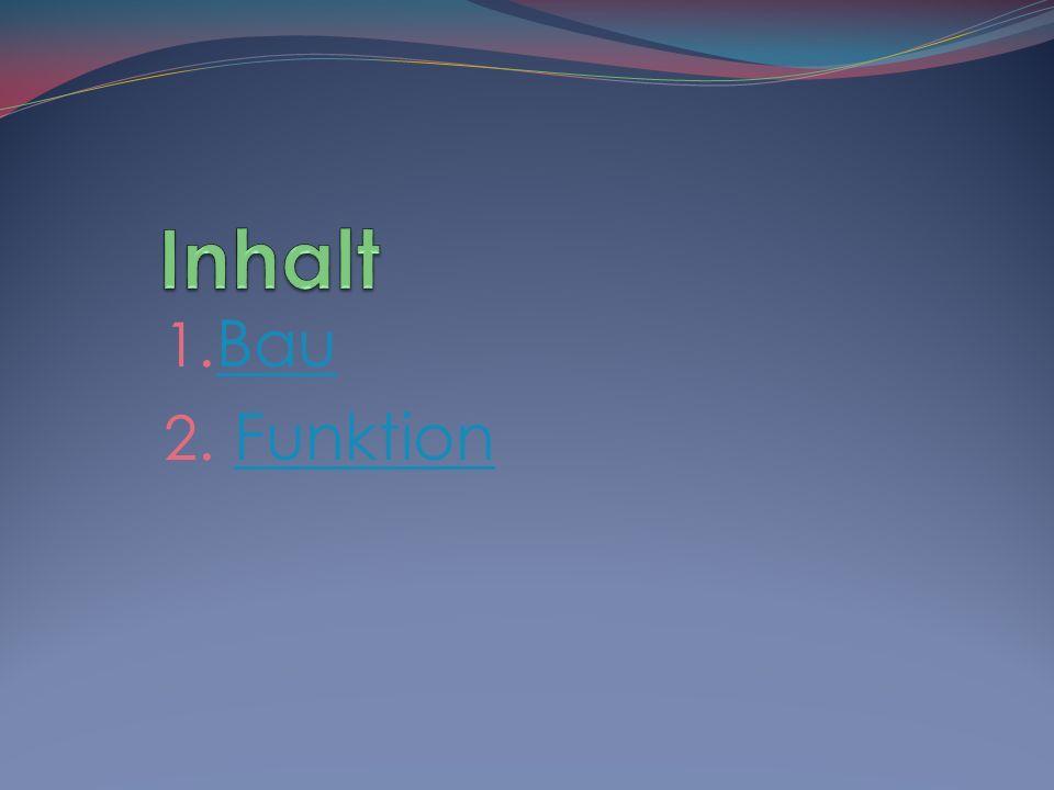 1.Pyramidenfaszikel oder cerebrospinaler Faszikel 2.