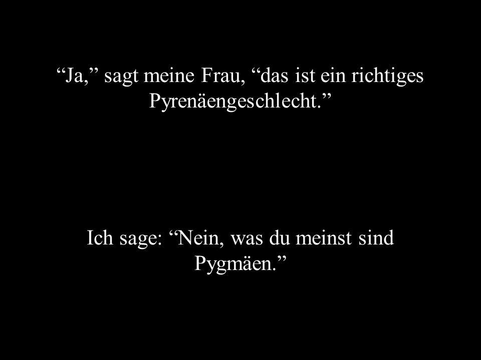 Ja, sagt meine Frau, das ist ein richtiges Pyrenäengeschlecht. Ich sage: Nein, was du meinst sind Pygmäen.
