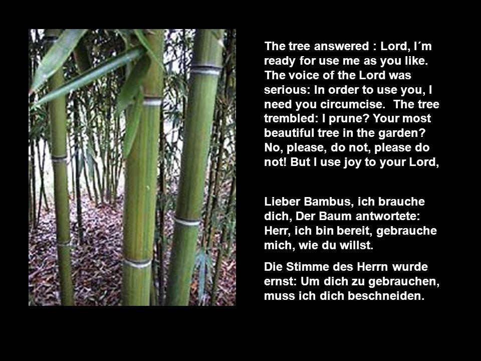 In einem großen Garten wuchs ein Bambusbaum. Der Herr des Gartens hatte seine Freude an ihm.
