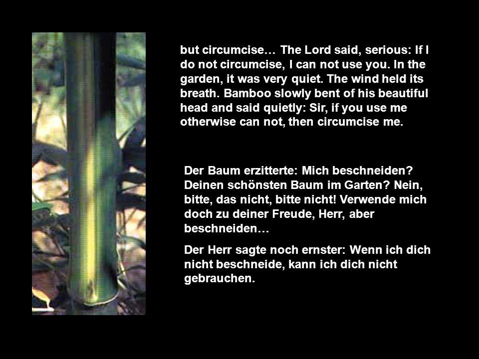 Lieber Bambus, ich brauche dich, Der Baum antwortete: Herr, ich bin bereit, gebrauche mich, wie du willst.