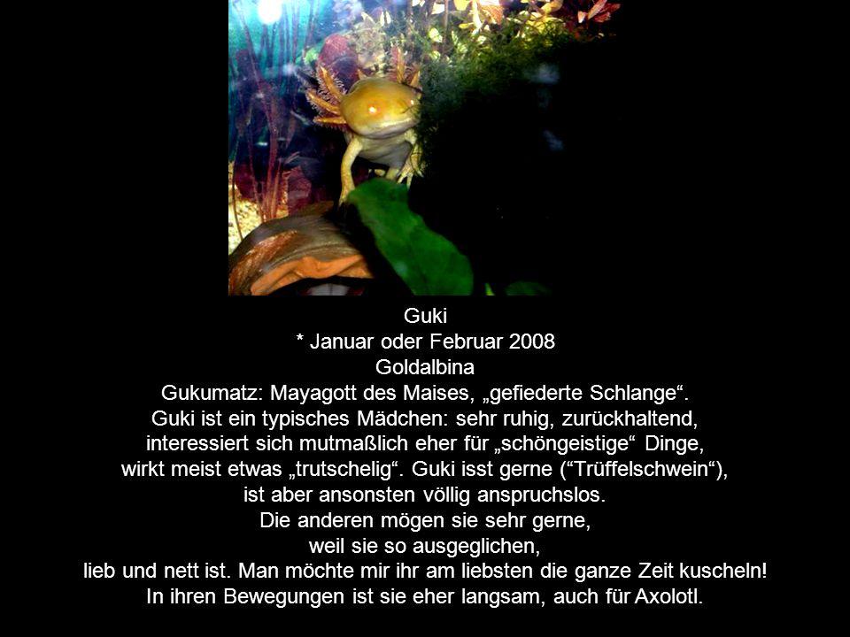 Yaluk * November 2007 in Freiburg; mehreiiger Zwilling von Xami Weißling (kein Albino!) Yaluk: Mayagott des Blitzes Yaluk ist ein ganz süßer, lustiger, aufmerksamer Kerl, stets zu Unsinn aufgelegt.