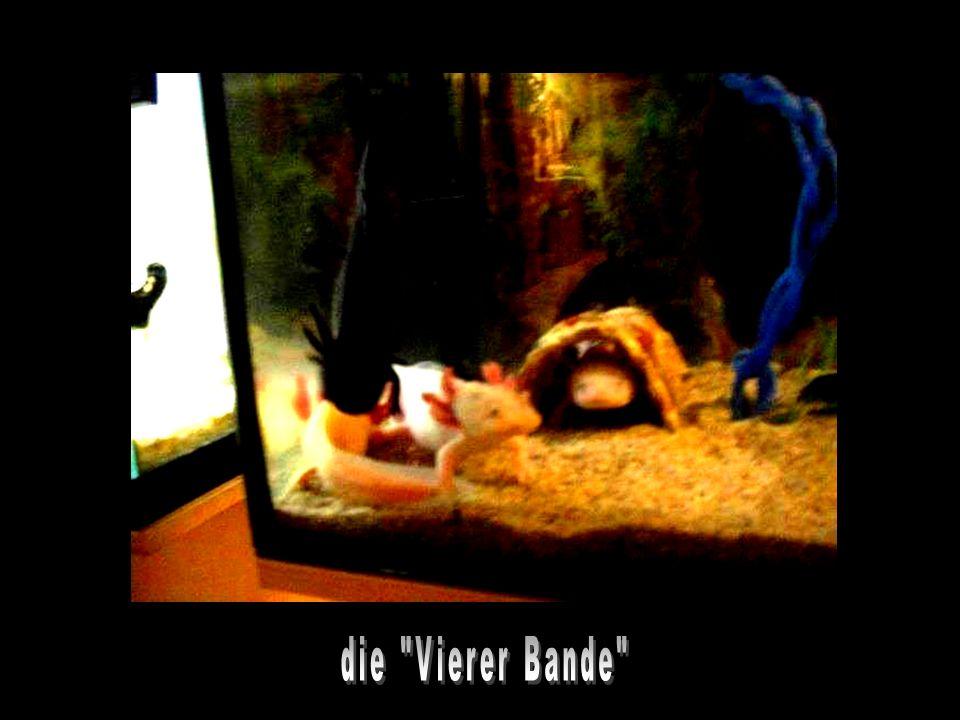 G U K I C A B R A Y A L U K X A M I bitte klicken! hme12@t-online.de
