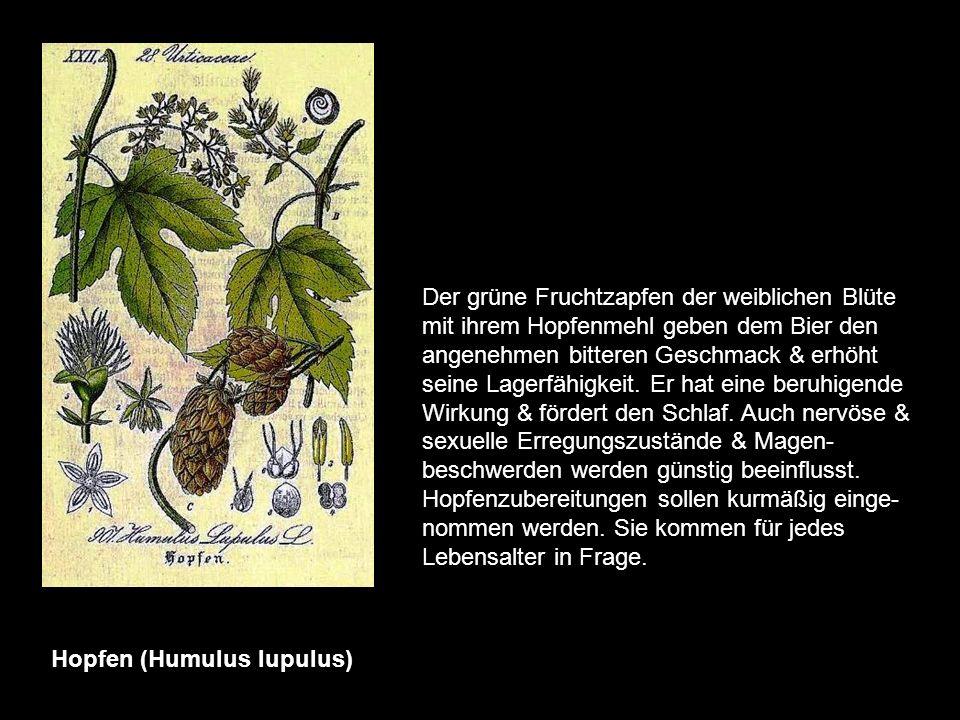 Haronga (madagascariensis) Haronga-Extrakte spielen in der Medizin madegassischer & zentralafrikanischer Völker seit langem eine Rolle. Benutzt werden