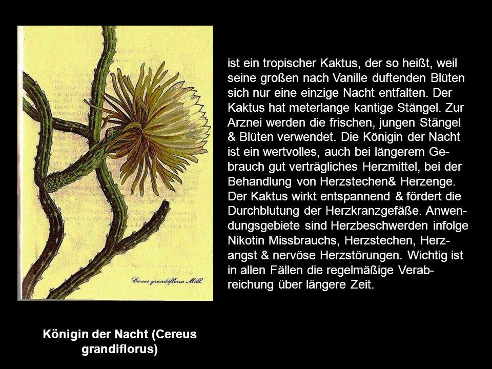 Kamille (Matricaria chamomilla) die Heilwirkung der Kamille ist wissenschaftlich begründet. Sie wächst in ganz Europa. Arznei- lich verwendet werden d