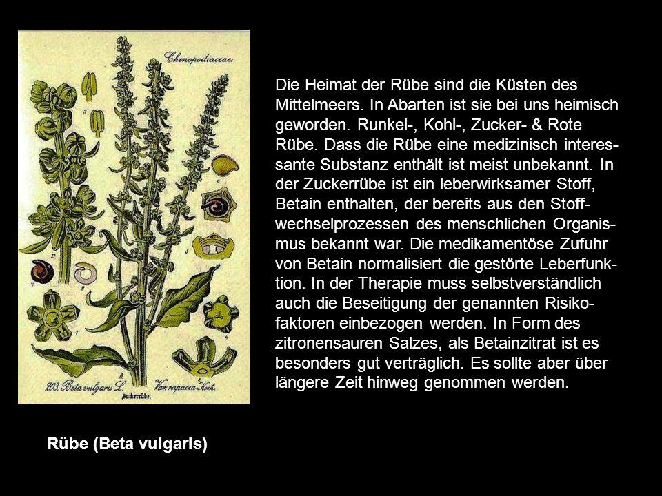 Rosskastanie (Aesculus hippocastanum) Die Heimat ist der Balkan & der Kaukasus, Mitte des 16.Jh wurde er im Mitteleuropa bekannt. Die arzneiliche Verw