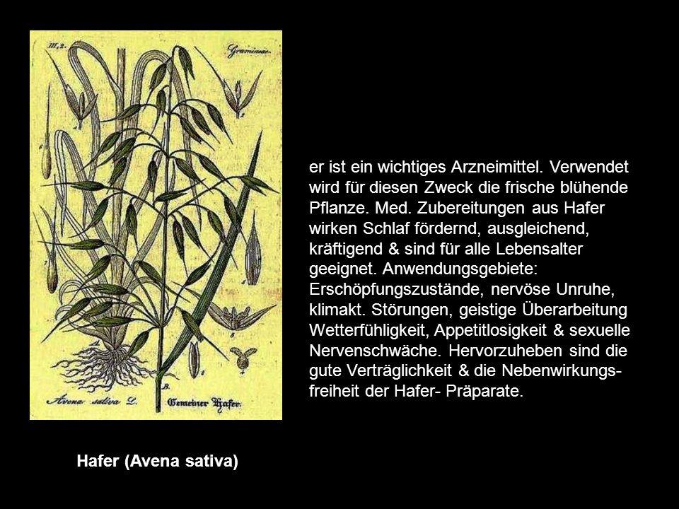 Ginkgo (biloba/Salisburia adiantifolia) Er ist ein Baum Ostasiens. Die Blätter enthalten gefäßwirksame & durchblu- tungsfördernde Stoffe. Das Hauptan-
