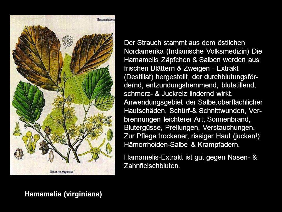 Hafer (Avena sativa) er ist ein wichtiges Arzneimittel. Verwendet wird für diesen Zweck die frische blühende Pflanze. Med. Zubereitungen aus Hafer wir
