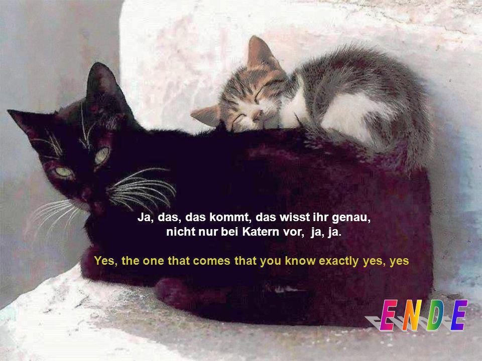 Ja, das kommt, das wisst ihr genau, nicht nur bei Katern vor Yes, that is, that you know exactly not only in tomcat before