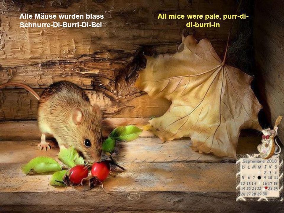 Alle Mäuse wurden blass Schnurre-Di-Burri-Di-Bei All mice were pale, purr-di- di-burri-in
