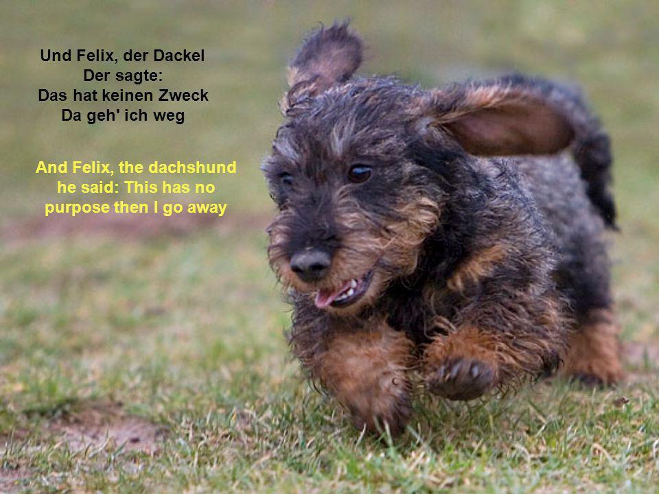 Und Felix, der Dackel Der sagte: Das hat keinen Zweck Da geh ich weg And Felix, the dachshund he said: This has no purpose then I go away