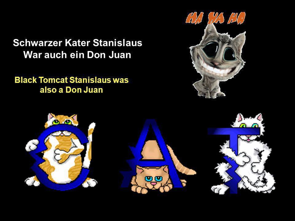 Schwarzer Kater Stanislaus War auch ein Don Juan Black Tomcat Stanislaus was also a Don Juan