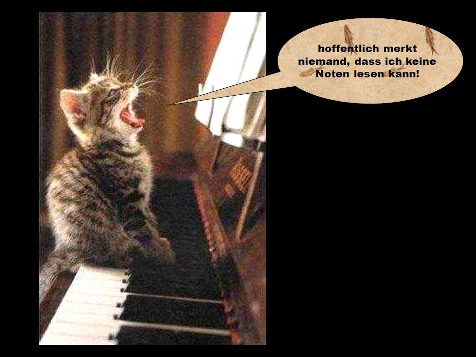 Ich kann´s nich glaubn, dass manche Katzn so´n Stress habn!