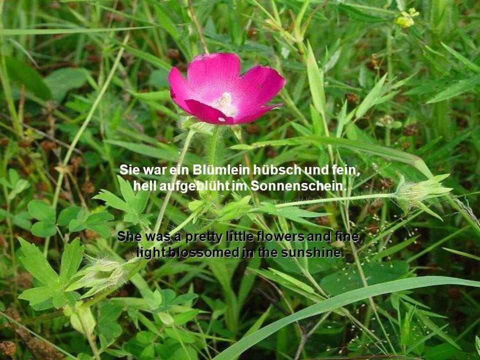 Text: Wilhelm Busch automatisch!