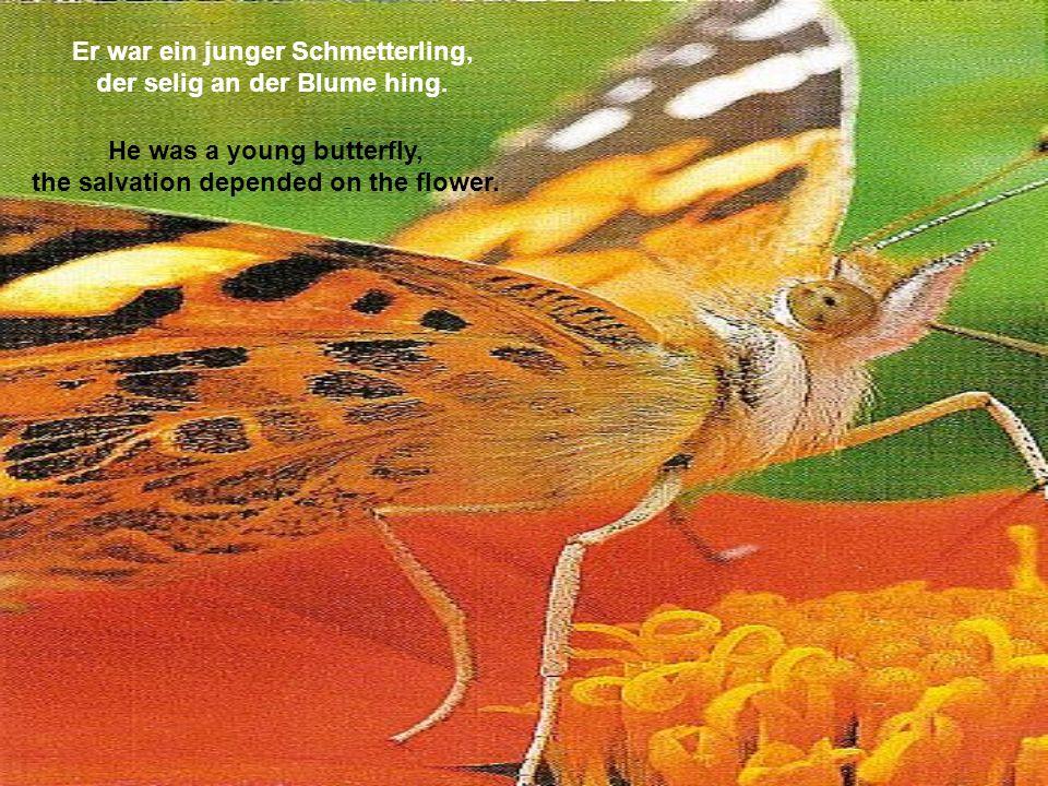 Er war ein junger Schmetterling, der selig an der Blume hing.