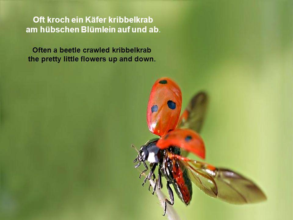 Oft kroch ein Käfer kribbelkrab am hübschen Blümlein auf und ab.
