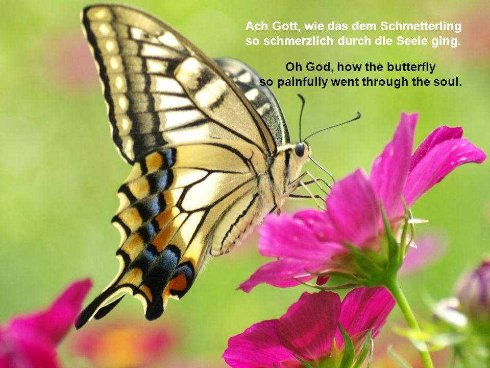 Ach Gott, wie das dem Schmetterling so schmerzlich durch die Seele ging.