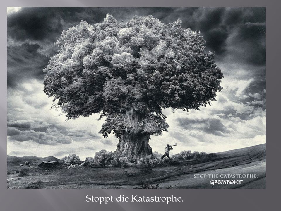 Stoppt die Katastrophe.