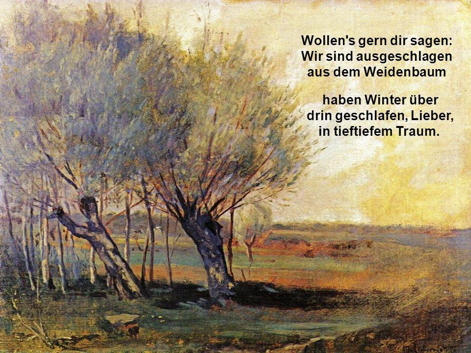 Wollen s gern dir sagen: Wir sind ausgeschlagen aus dem Weidenbaum, haben Winter über drin geschlafen, Lieber, in tieftiefem Traum.