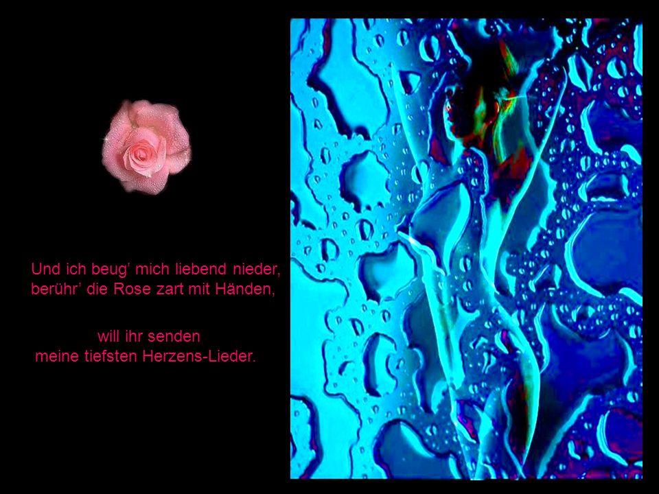 Und ich beug mich liebend nieder, berühr die Rose zart mit Händen, will ihr senden meine tiefsten Herzens-Lieder.
