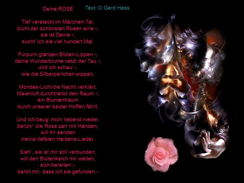 Deine ROSE Tief versteckt im Märchen-Tal, blüht der schönsten Rosen eine -; sie ist Deine -; sucht ich sie viel hundert Mal.