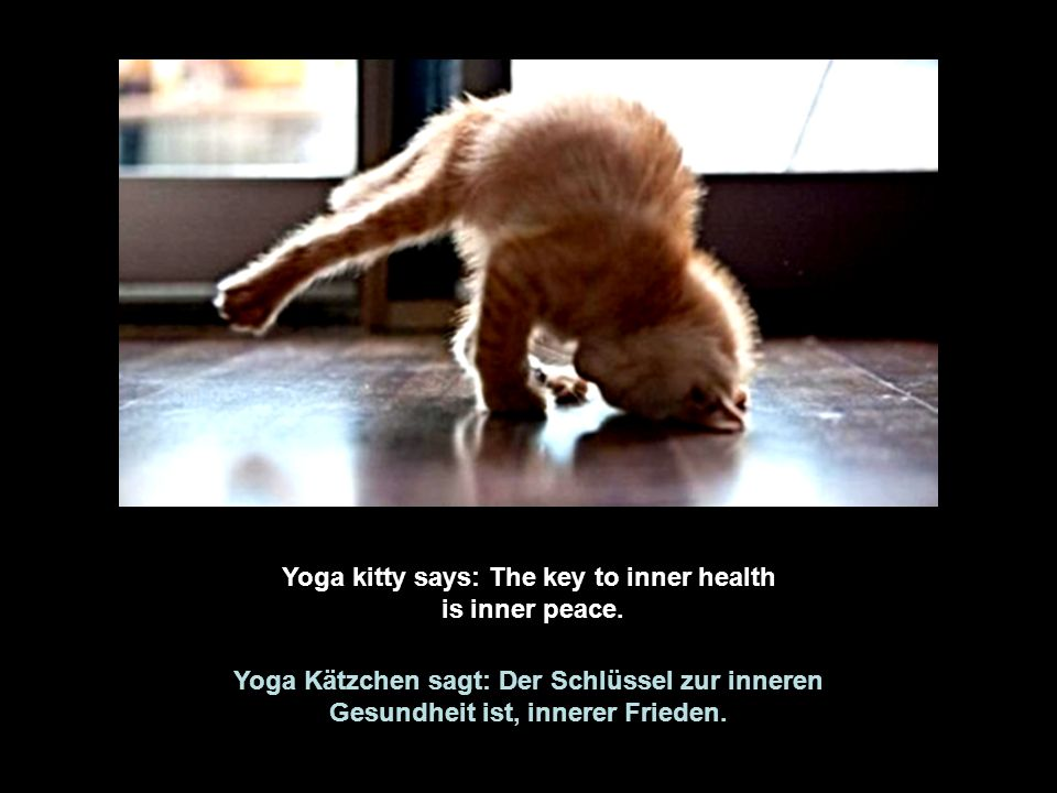 Yoga kitty says: The key to inner health is inner peace.