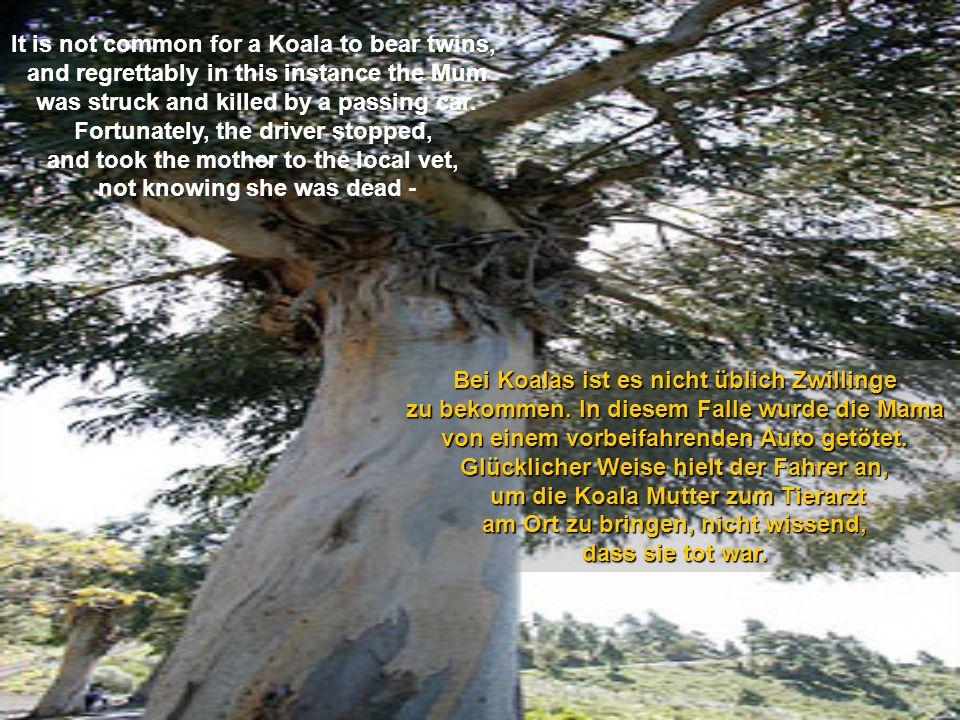 hme12hme12 hme12@t-online.de Eine wahre Geschichte aus Australien. A true story from Australia c l i c k !
