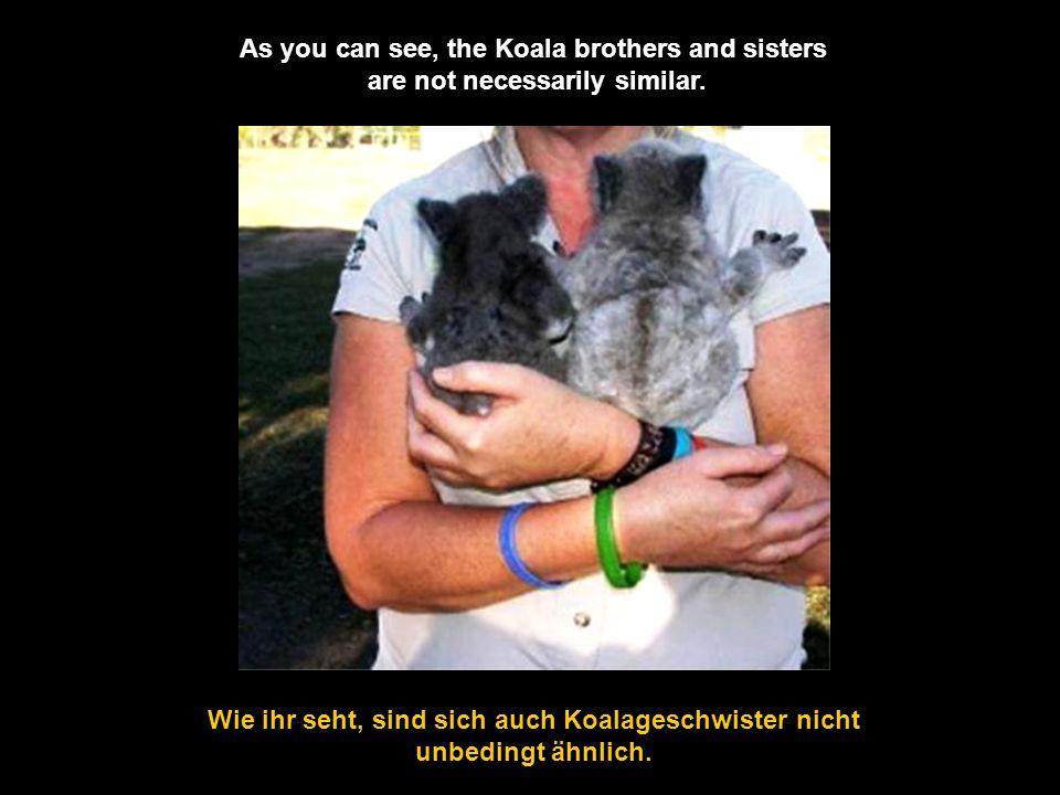 Wie ihr seht, sind sich auch Koalageschwister nicht unbedingt ähnlich.