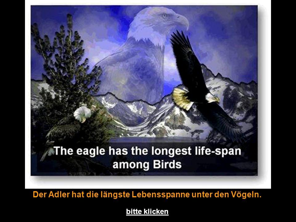 Der Adler hat die längste Lebensspanne unter den Vögeln. bitte klicken