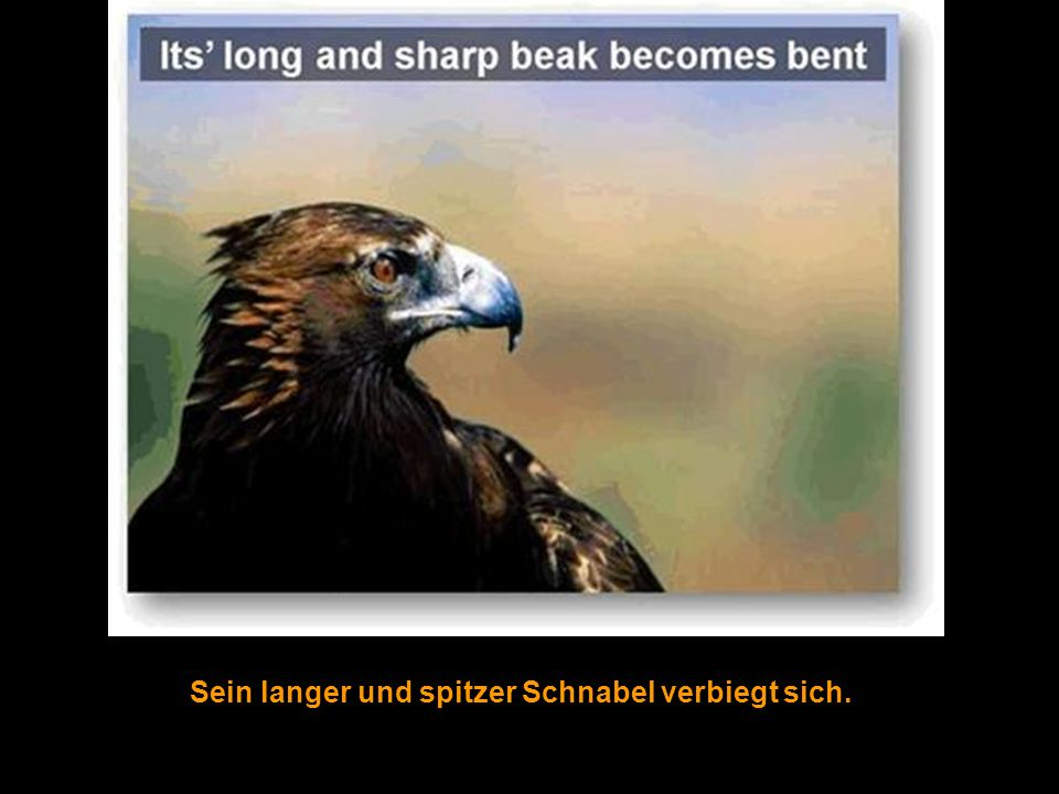 This is Amazing.It is no wonder there are scriptural references to the eagle.